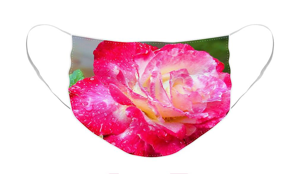 Fine Art Photography Face Mask featuring the photograph Double Delight by Patricia Griffin Brett