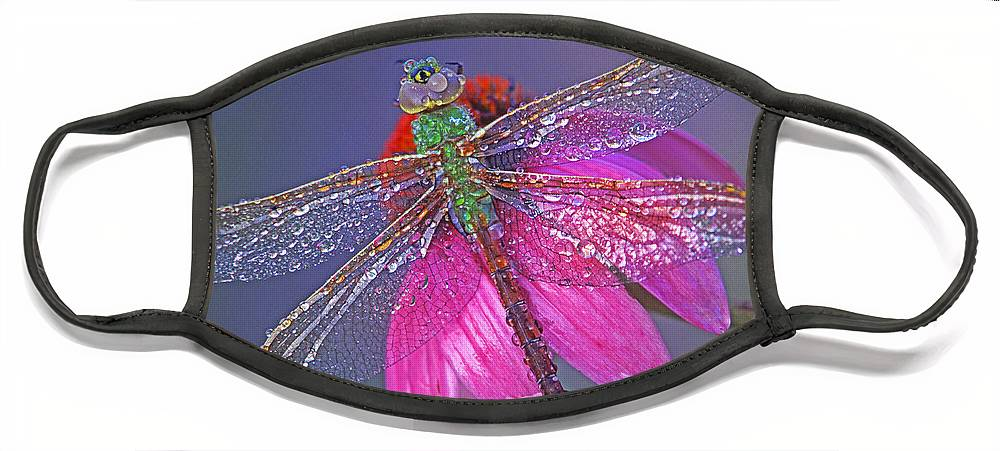 Dew Covered Dragonfly Rests On Purple Cone Flower Face Mask featuring the photograph Dreaming Dragon by Bill Morgenstern