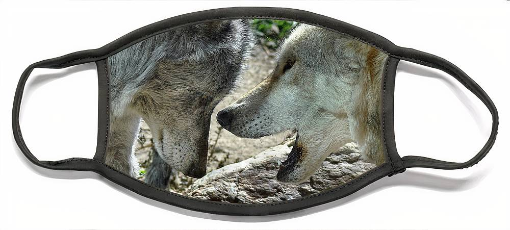 Diane Berry Face Mask featuring the photograph Druid Pack Yellowstone by Diane E Berry