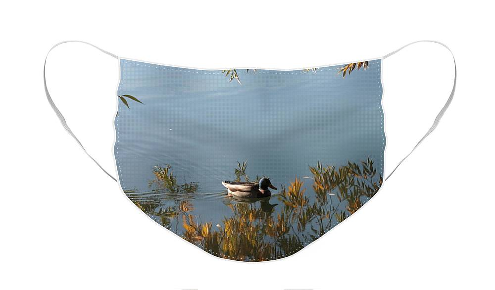Autumn Face Mask featuring the photograph Duck on Golden Pond by Carol Groenen