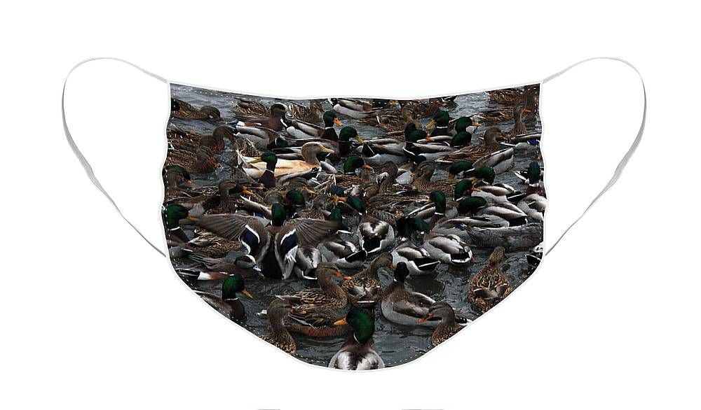 Duck Face Mask featuring the photograph Duck Soup by Carol Groenen