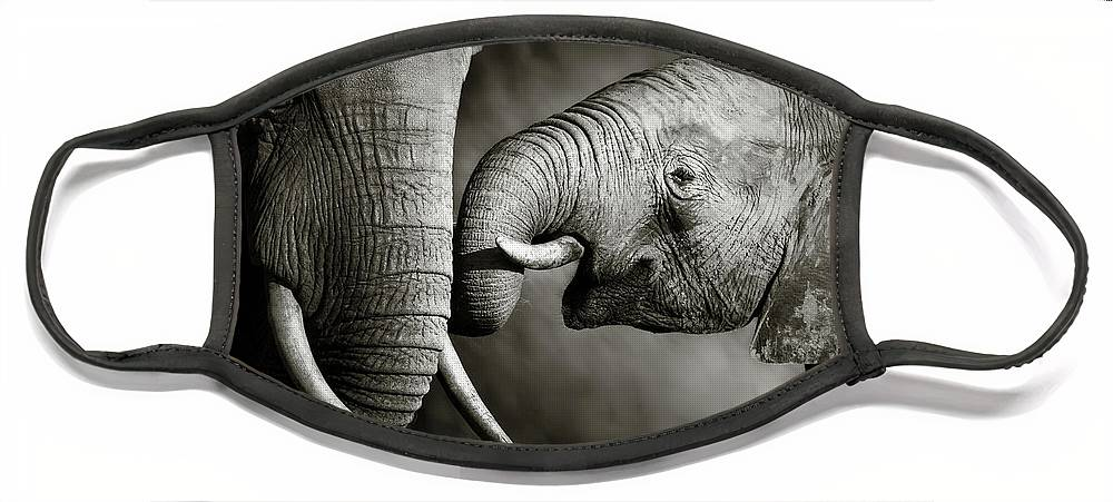 Elephant; Interact; Touch; Gently; Trunk; Young; Large; Small; Big; Tusk; Together; Togetherness; Passionate; Affectionate; Behavior; Art; Artistic; Black; White; B&w; Monochrome; Image; African; Animal; Wildlife; Wild; Mammal; Animal; Two; Moody; Outdoor; Nature; Africa; Nobody; Photograph; Addo; National; Park; Loxodonta; Africana; Muddy; Caring; Passion; Affection; Show; Display; Reach Face Mask featuring the photograph Elephant affection by Johan Swanepoel