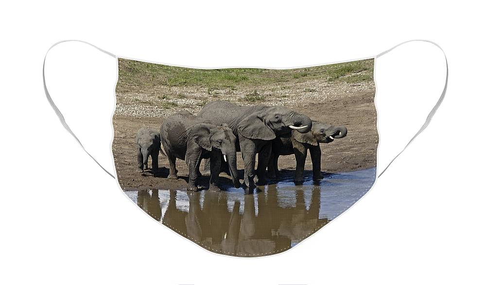 Africa Face Mask featuring the photograph Elephants in the Mirror by Michele Burgess