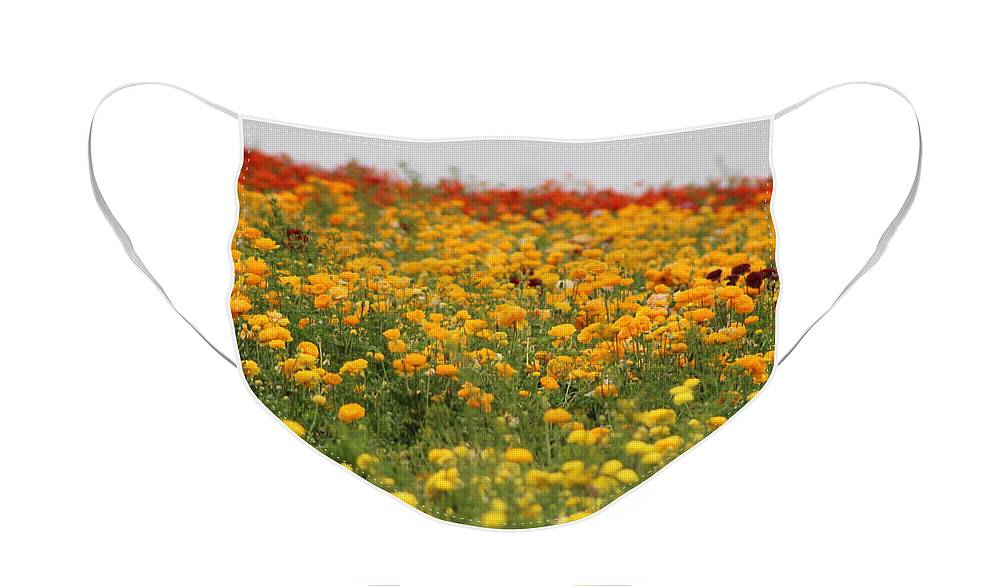 Fields Of Candy Corn Face Mask featuring the photograph Fields of Candy Corns by Colleen Cornelius