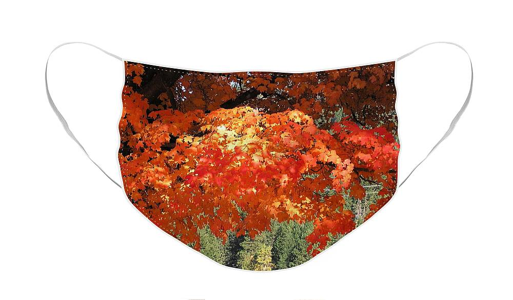 Autumn Photographs Face Mask featuring the photograph Flickering Sunlight by Louise Magno