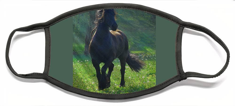 Horses Face Mask featuring the photograph Friesian Sun by Fran J Scott