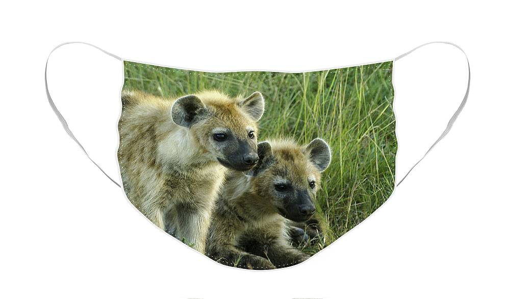Africa Face Mask featuring the photograph Fuzzy Baby Hyenas by Michele Burgess