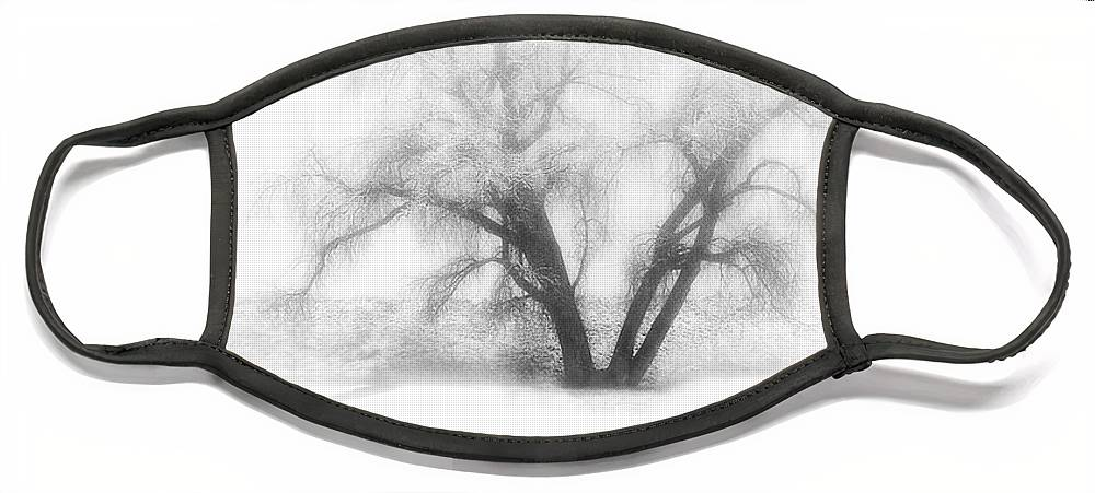 Tree Face Mask featuring the photograph Getting There by Marilyn Hunt
