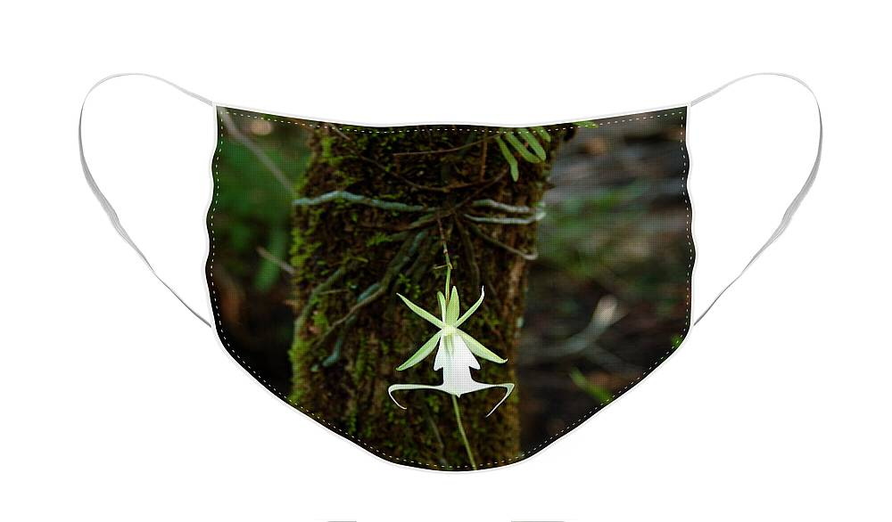 Ghost Face Mask featuring the photograph Ghost Orchid of the Fakahatchee Strand by Rich Leighton