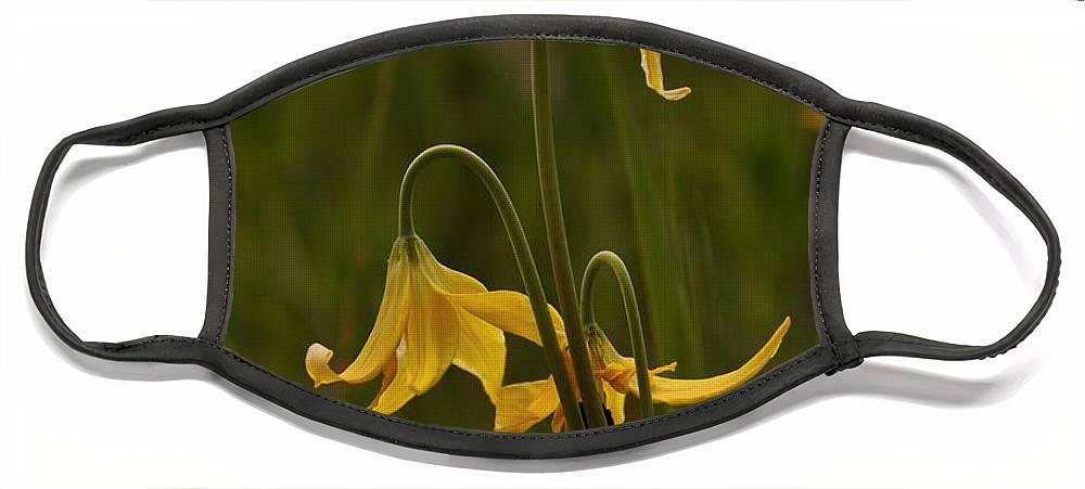 Yellowstone National Park Face Mask featuring the photograph Glacier Lilly by Frank Madia