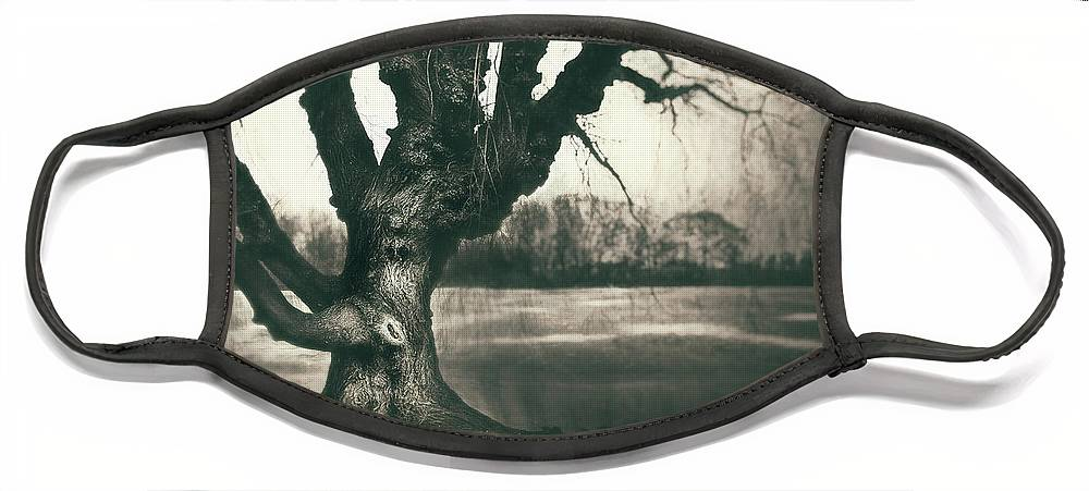 Gnarled Face Mask featuring the photograph Gnarled Old Tree by Scott Norris