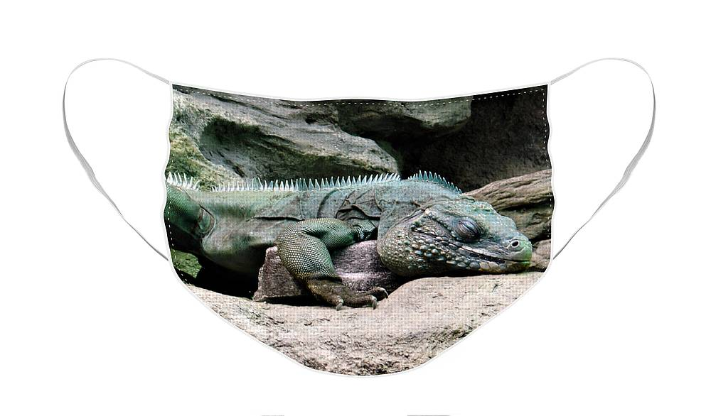 Lizard Face Mask featuring the photograph Grand Cayman Blue Iguana by Angelina Tamez