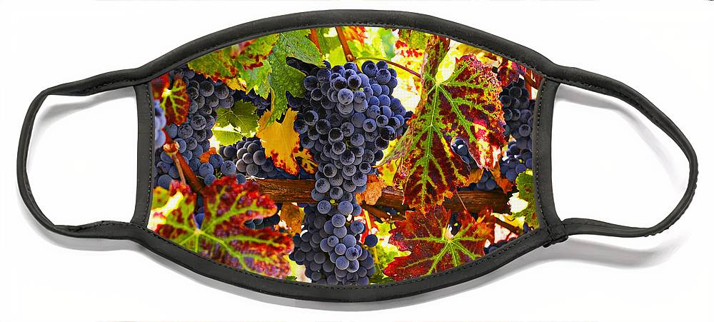 Grapes Face Mask featuring the photograph Grapes on vine in vineyards by Garry Gay
