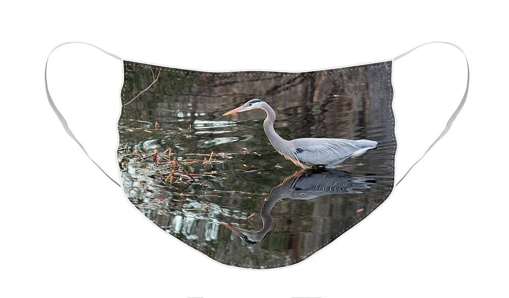 Great Blue Heron Face Mask featuring the photograph Great Blue Heron and Reflection III by Suzanne Gaff