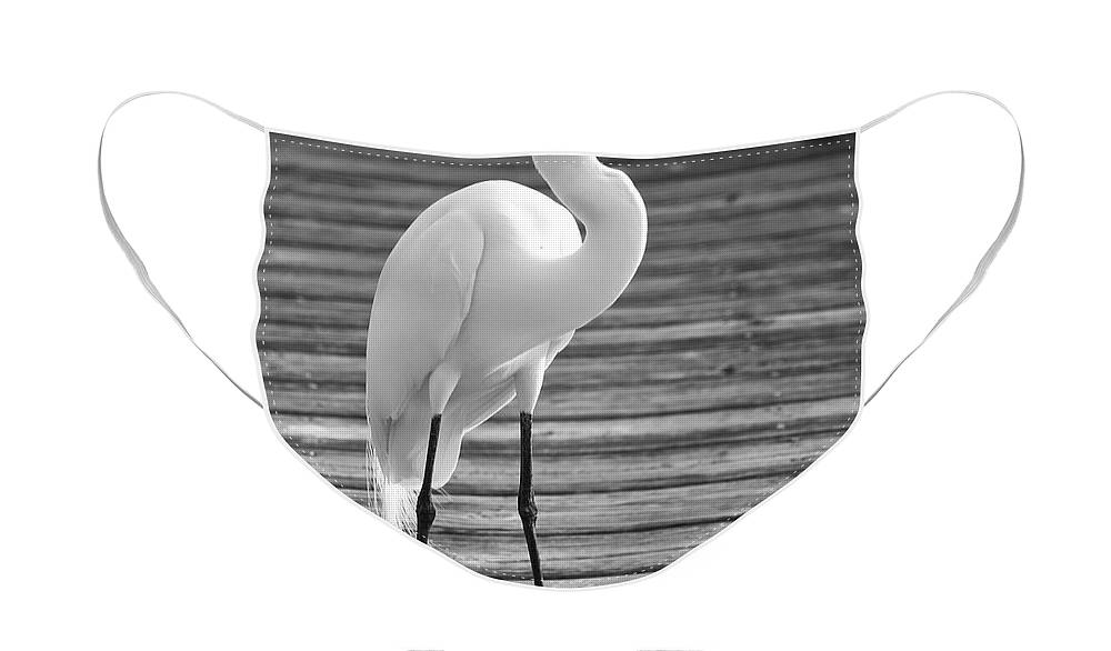 Egret Face Mask featuring the photograph Great Egret on the Pier - Black and White by Carol Groenen