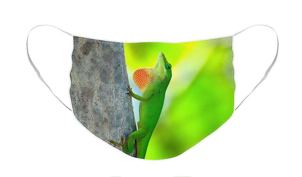Lizard Face Mask featuring the photograph Green Anole by Rich Leighton