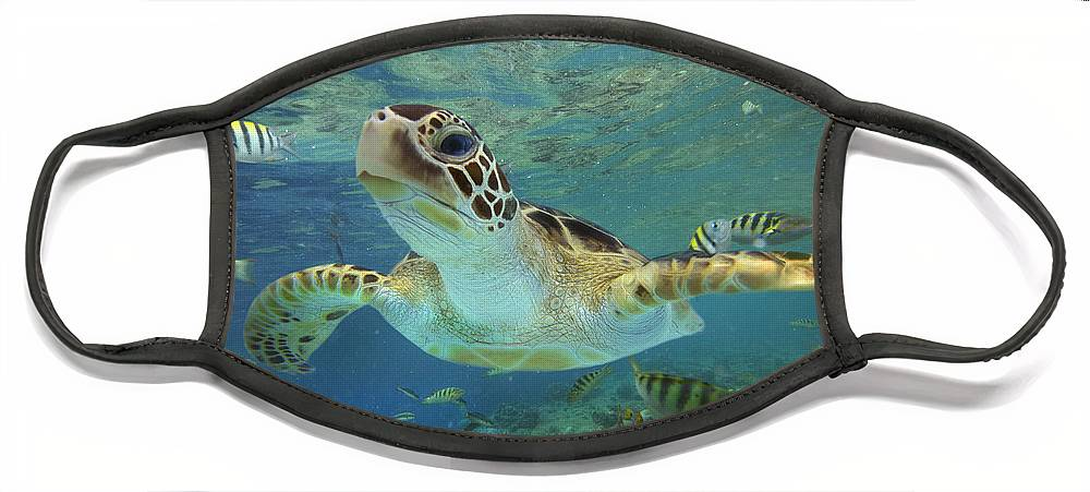 00451418 Face Mask featuring the photograph Green Sea Turtle Swimming by Tim Fitzharris