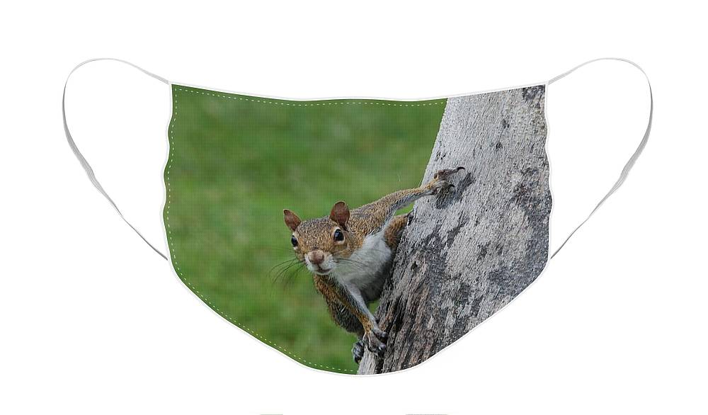 Squirrel Face Mask featuring the photograph Hanging On by Rob Hans