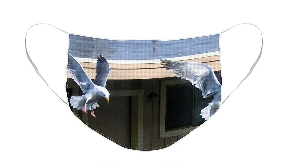 Seagulls Face Mask featuring the photograph High Spirits by Will Borden