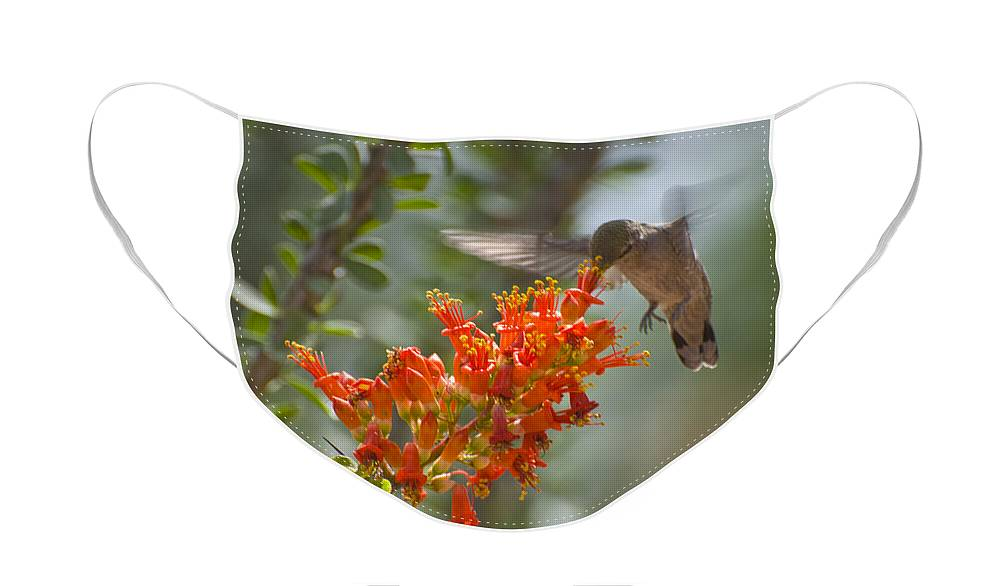 Hummingbird Face Mask featuring the photograph It Hums as it Eats by Richard Henne