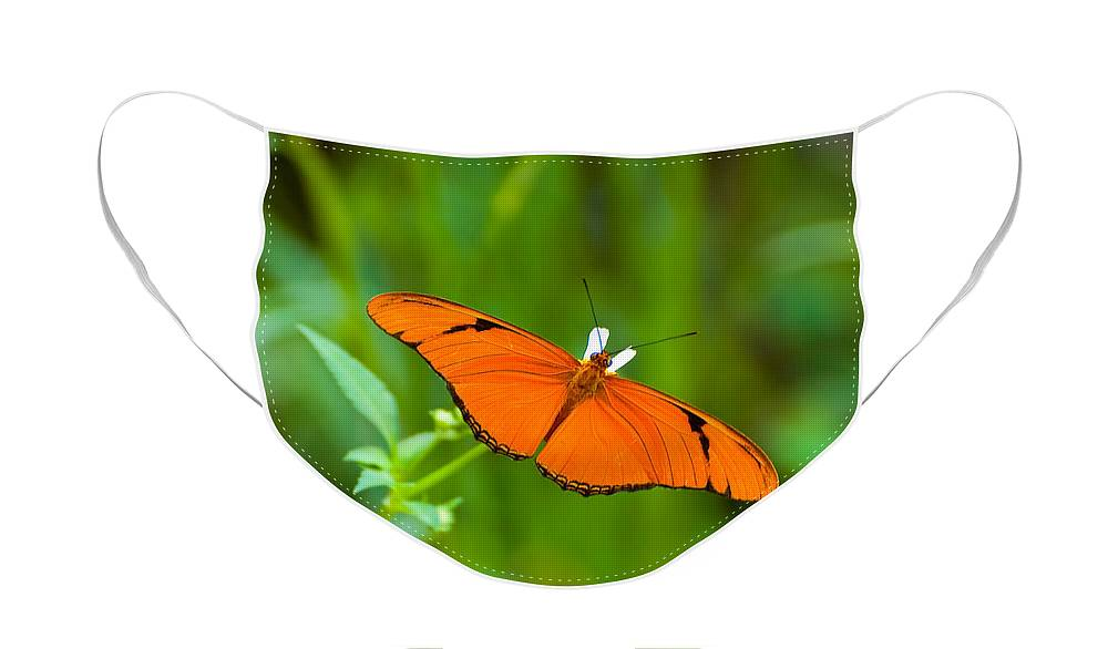 Butterfly Face Mask featuring the photograph Julia Butterfly by Rich Leighton