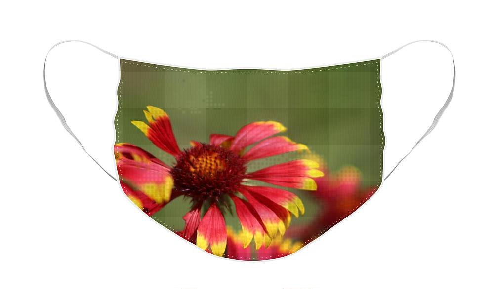 Coneflower Face Mask featuring the photograph Lemon Yellow and Candy Apple Red Coneflower by Colleen Cornelius