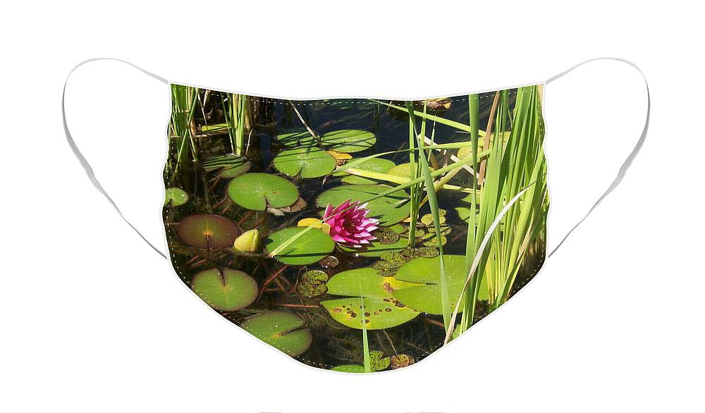 Lily Pad Face Mask featuring the photograph Lily Pad Pond in High Noon Sun by Colleen Cornelius