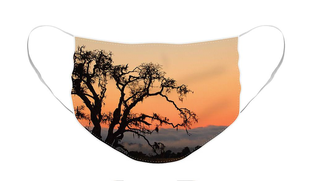 Tree Fog Landscape Weather Sunset Orange Nature Botanical Face Mask featuring the photograph Loan Tree Overlooking Fog by Jill Reger