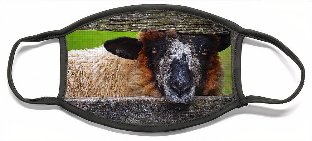 Lookin At Ewe Face Mask featuring the photograph Lookin at Ewe by Skip Hunt