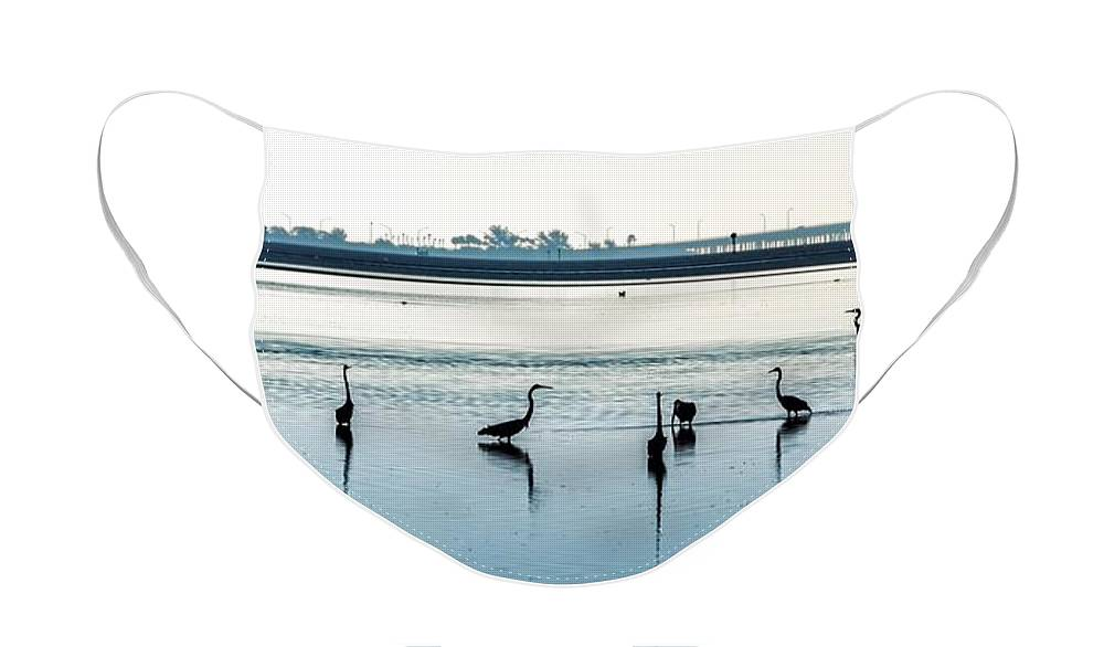 Seashore Face Mask featuring the photograph Low Tide Gathering by Steven Sparks