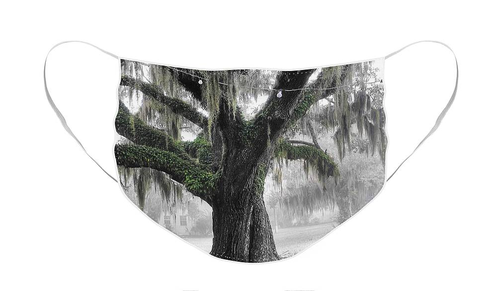 Live Oak Face Mask featuring the photograph Lowcountry Live Oak by Scott Hansen