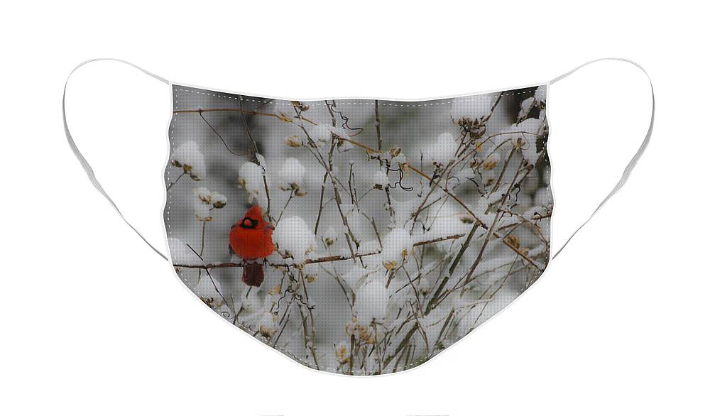 Snow Face Mask featuring the photograph Male Cardinal in the Snow by Teresa Mucha