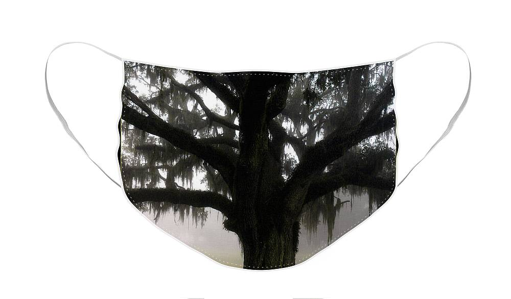 Lowcountry Face Mask featuring the photograph Mossy Oak by Scott Hansen