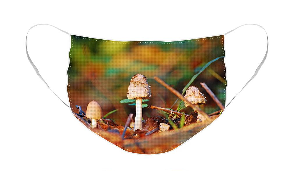 Mushrooms Face Mask featuring the photograph Mushrooms by Robert Meanor