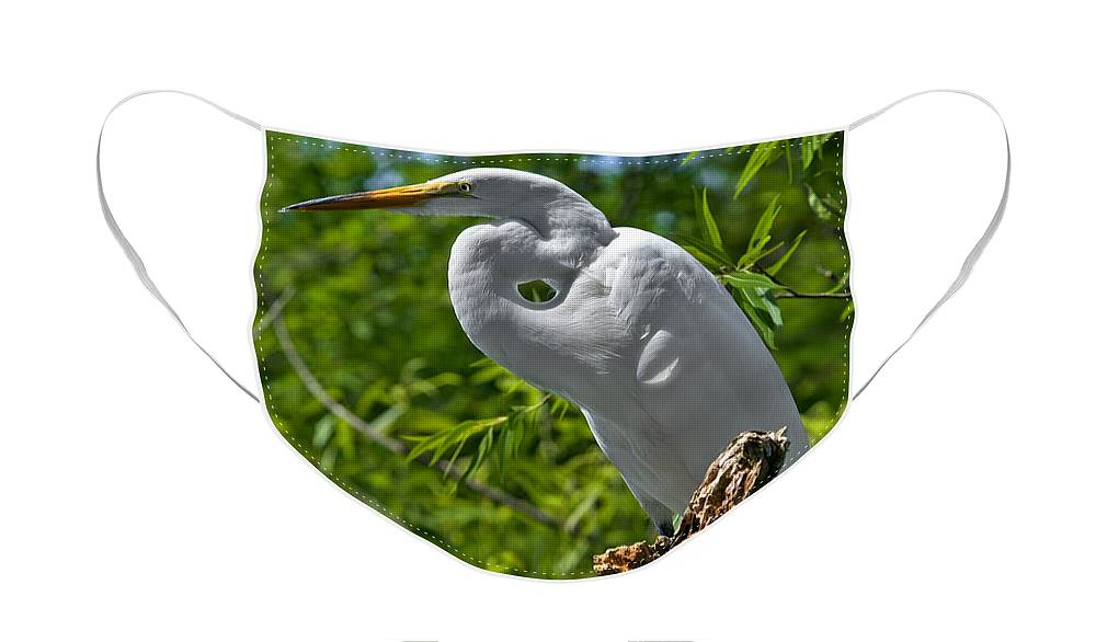 Bird Face Mask featuring the photograph On Break by Christopher Holmes