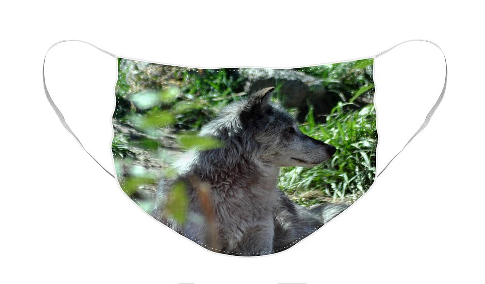Berry Face Mask featuring the photograph On Guard by Diane E Berry