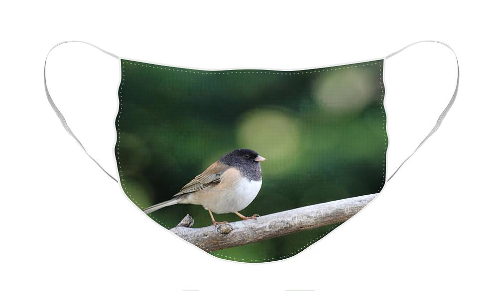 Wildlife Face Mask featuring the photograph Oregon Junco by Wingsdomain Art and Photography