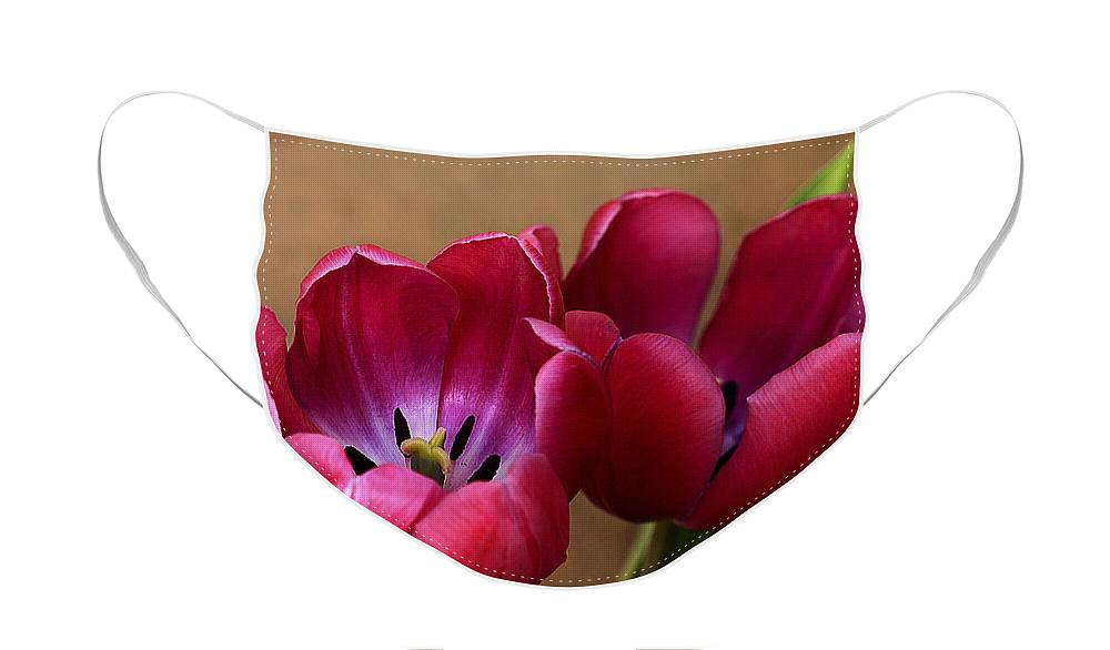 Pink Face Mask featuring the photograph Pink Tulip Pair by Deborah Benoit