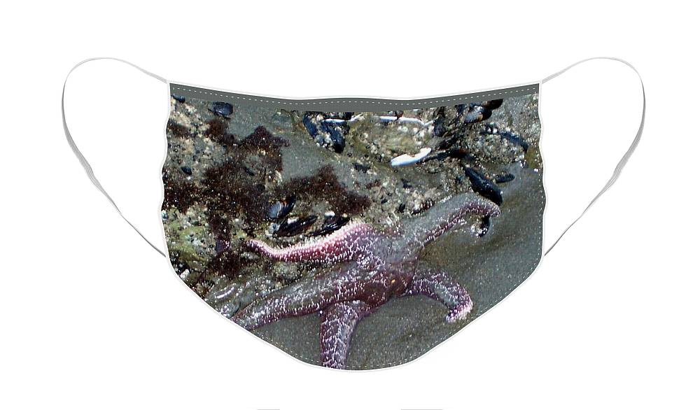 Starfish Face Mask featuring the photograph Poor little starfish by Elizabeth Klecker
