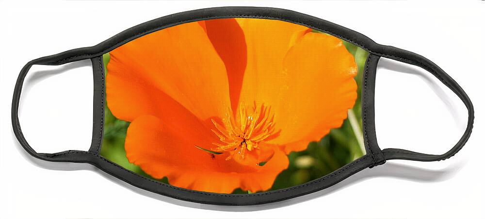 Floral Face Mask featuring the photograph Poppy by Paul Anderson