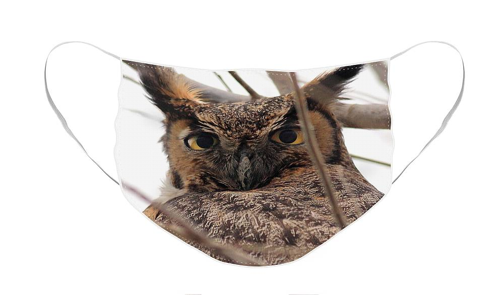 Bird Face Mask featuring the photograph Portrait of a Great Horned Owl by Wingsdomain Art and Photography