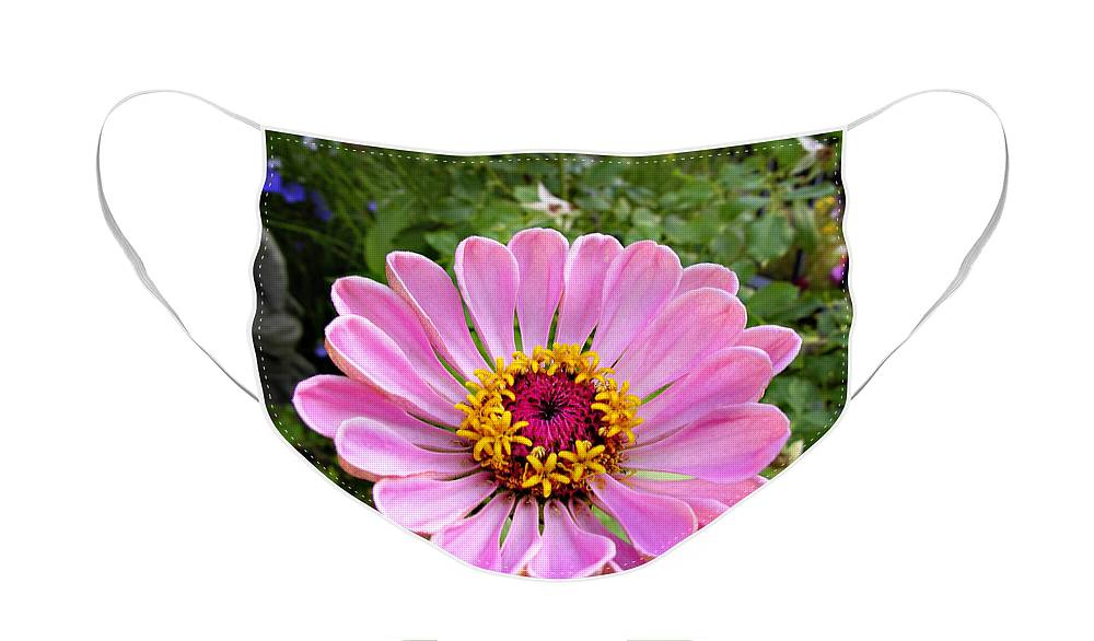 Flower Face Mask featuring the photograph Pretty in Pink Zinnia by Marilyn Hunt