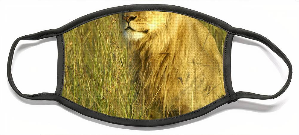 Africa Face Mask featuring the photograph Princely Lion by Michele Burgess
