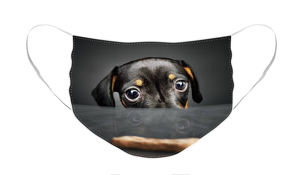 Puppy Face Mask featuring the photograph Puppy longing for a treat by Johan Swanepoel