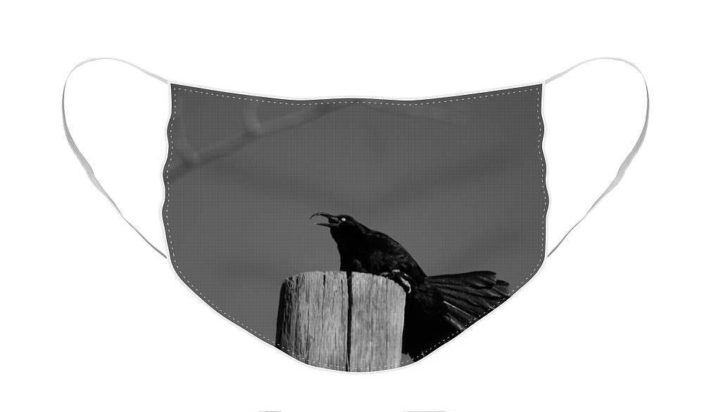 Black And White Photograph Face Mask featuring the photograph Raging Crow by Colleen Cornelius
