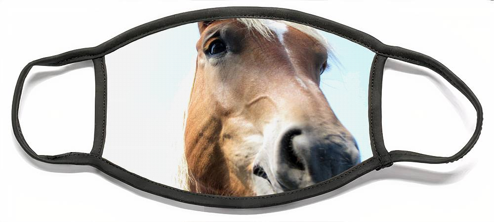 Horse Face Mask featuring the photograph Really by Amanda Barcon