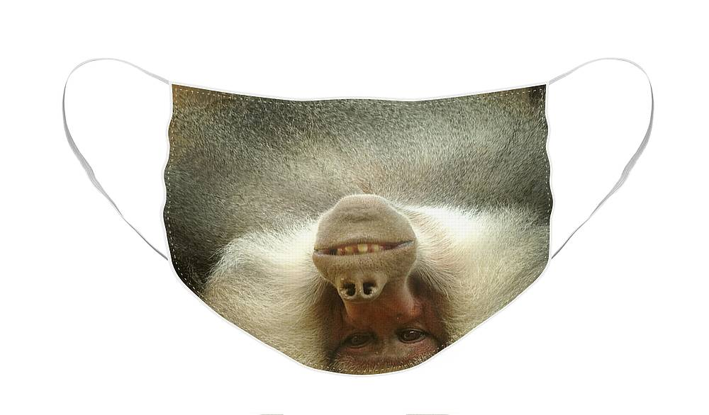 Baboon Face Mask featuring the photograph Reclining Baboon by Richard Henne