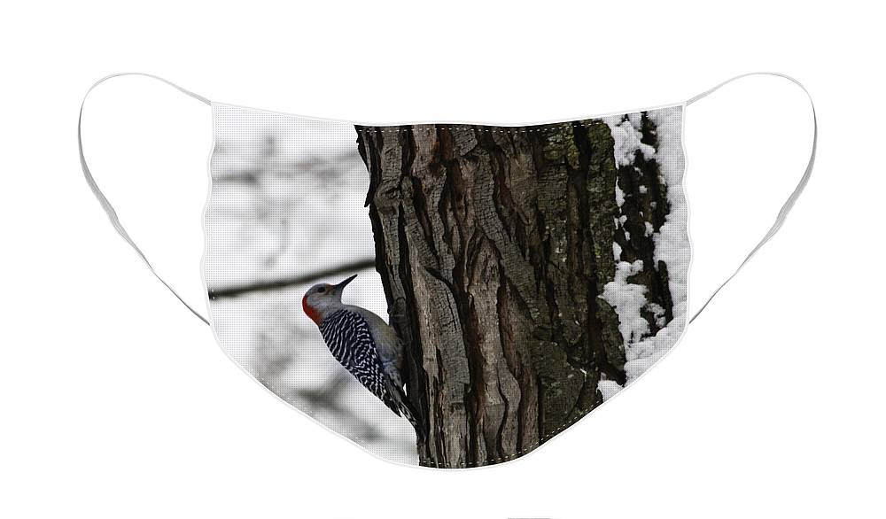 Woodpecker Face Mask featuring the photograph Red Bellied Woodpecker No 1 by Teresa Mucha