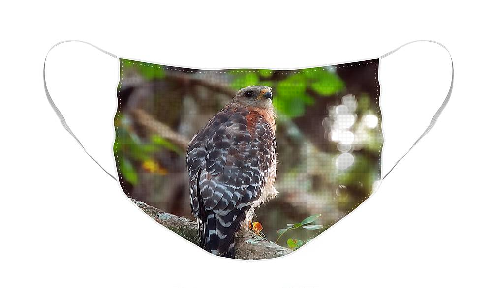 Bird Face Mask featuring the greeting card Red-Shouldered Hawk by Rich Leighton