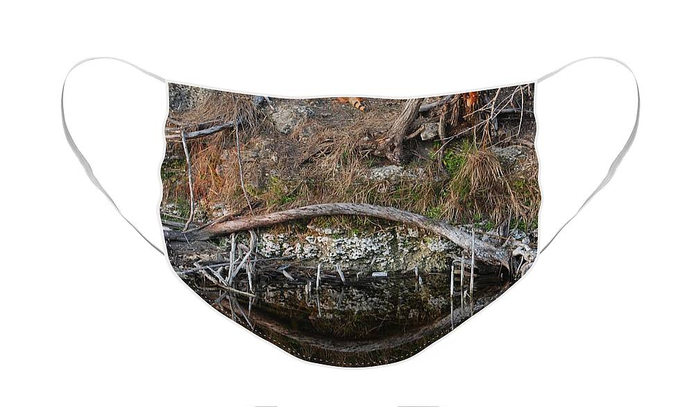 Iguana Face Mask featuring the photograph Reflections Iguana by Rob Hans